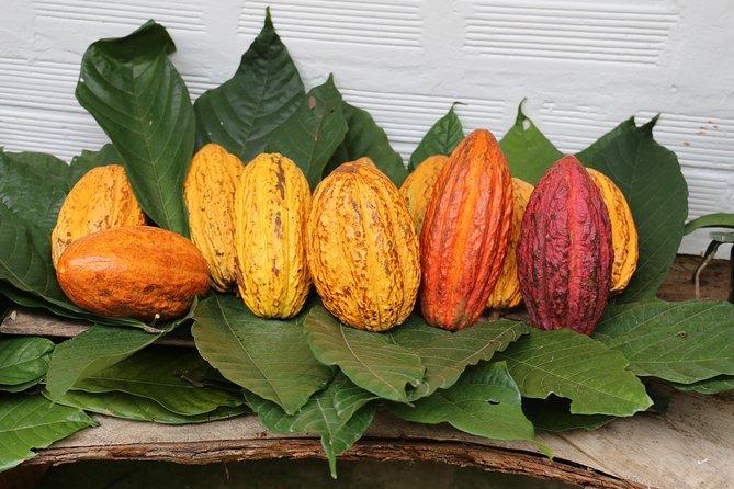 Chocolate & Coffee Farm Tour