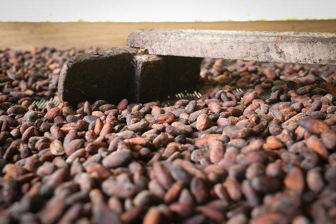 Chocolate & Coffee Farm Experience