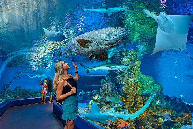 Cairns Aquarium Admission Ticket