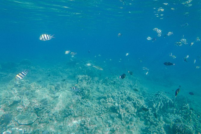 All Ticket Inclusive : Lovina Snorkeling - Waterfall - Handara Gate photo 10