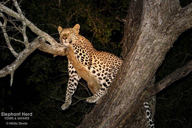 Kruger National Park Sunset Drive