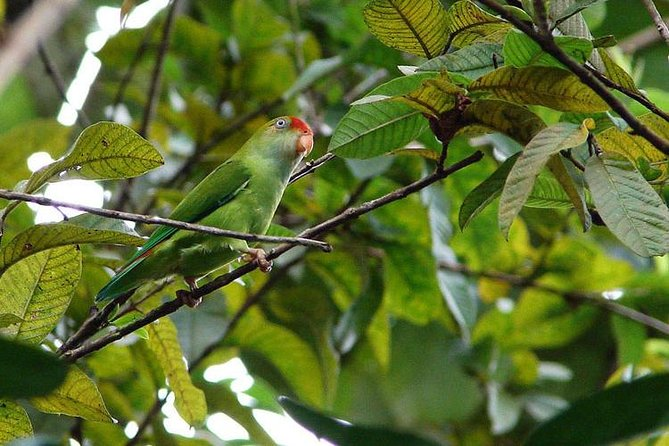Go Birding with Experts -1 Day guided tour to Sinharaja Rain Forest photo 2