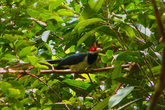Go Birding with Experts -1 Day guided tour to Sinharaja Rain Forest photo 6