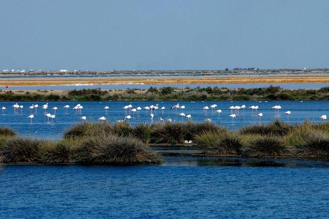 Private Day Trip from Malaga: Doñana National Park & Sanlucar