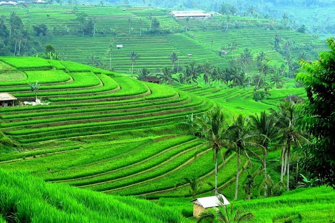 Subak Bali UNESCO World Heritage Tour