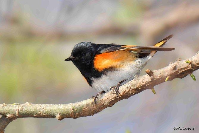 Birding at Beaver Lake