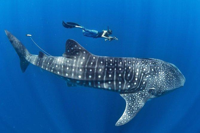 Whale Shark Encounter & Sumilon Sandbar & Canyoneering in Kawasan Falls