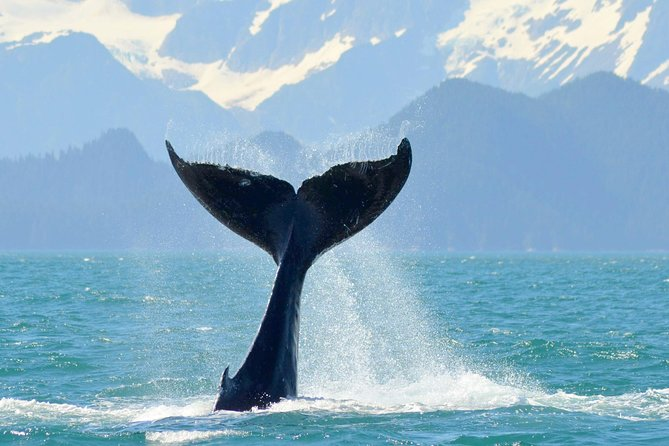 6 Guest Max - Whale Watch & Wildlife Cruise (Half Day) 9:00 am departure