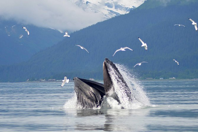 6 Guest Max - Whale Watch & Wildlife Cruise (Half Day) 1:30 pm departure