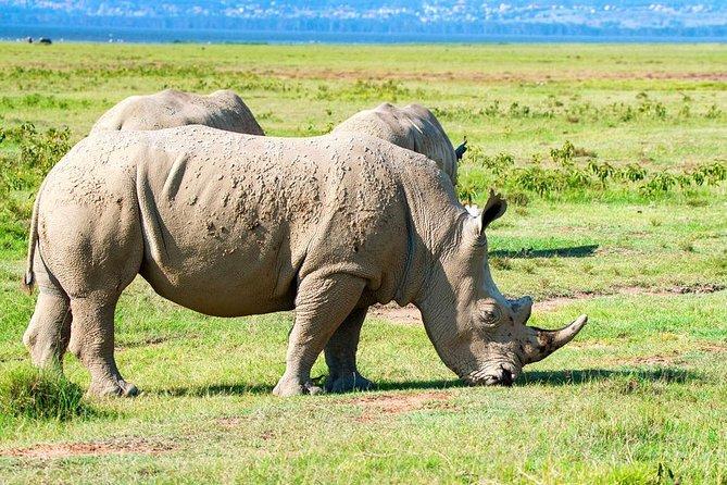 6 Days Mara, Lake Nakuru & Amboseli Safari