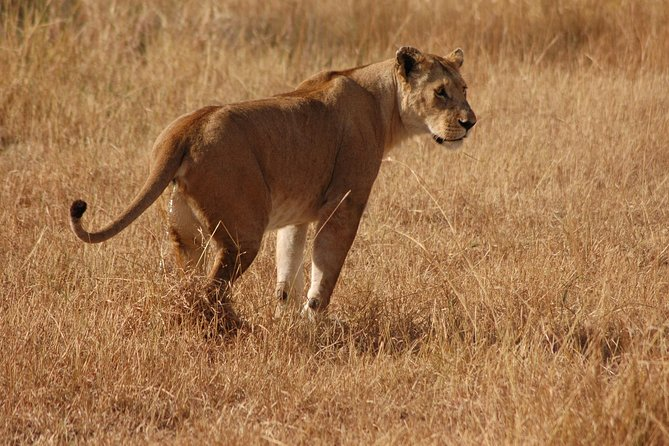 4 Days Wild Safari