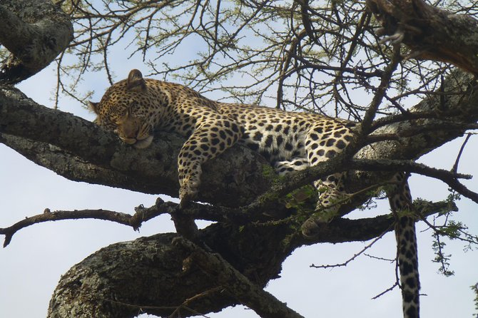 7 Days African holiday Safari photo 2