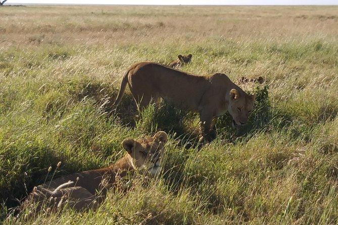 7 Days African holiday Safari
