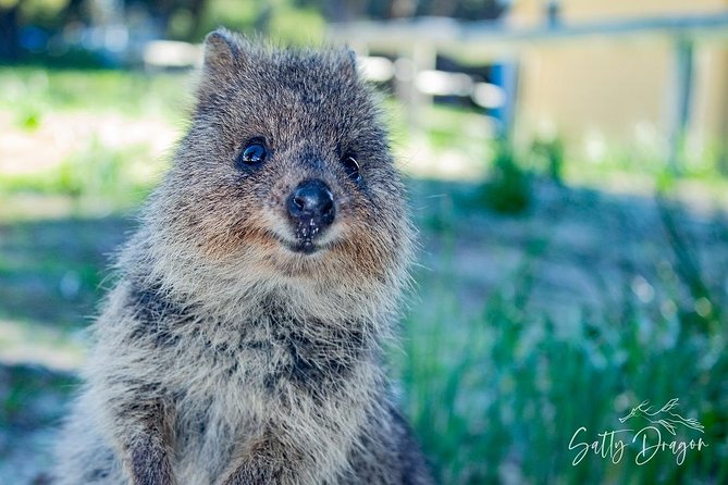 Rottnest Island: Quokkas and Snorkeling Adventure Boat Tour from Fremantle