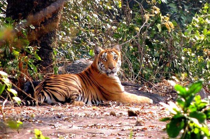 Birding & Wildlife Safari - Western Ghats