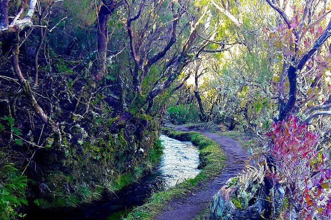 Lakes of Madeira Levada Walk from Funchal photo 12