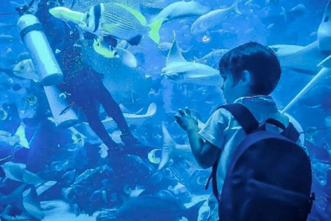 Skip the Line: Dubai Mall Aquarium Underwater Zoo Ticket Without Transfer