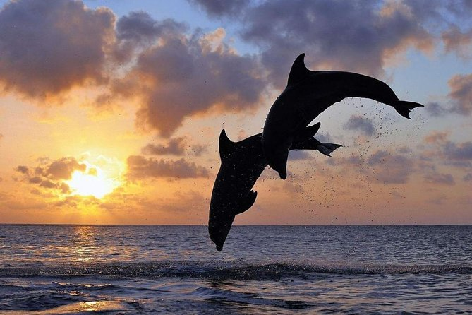 Private Tour : Watching dolphin at Lovina Beach, Waterfalls,Hidden hills, temple
