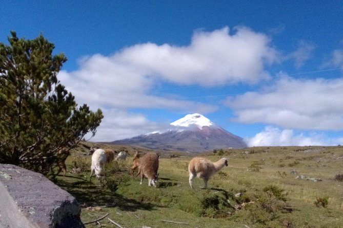Cotopaxi National Park - Private Tour