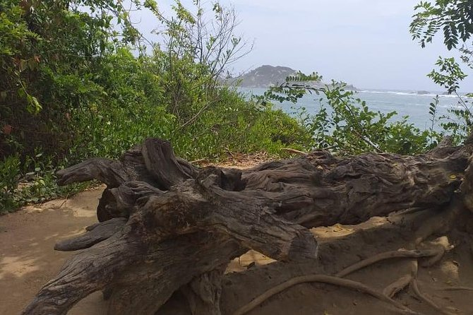 Excursion to Cabo San Juan del Guia: PNN, Walk and SPECTACULAR Beaches!