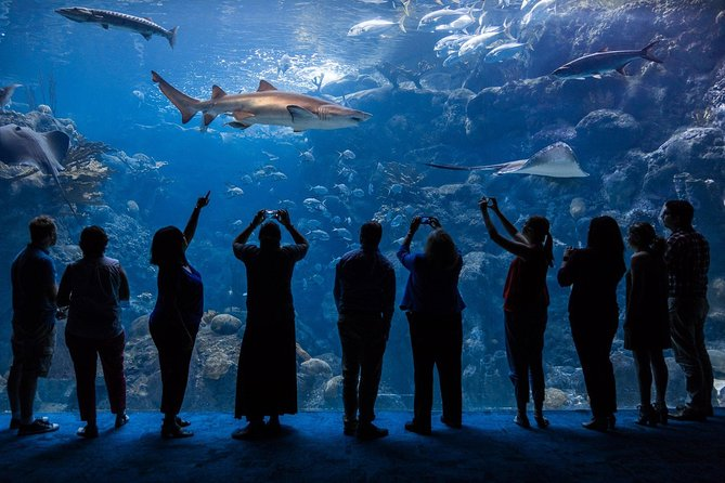 Skip the Line: The Florida Aquarium in Tampa Bay Ticket