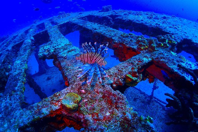 2 Tank Adventure Dive Reservation photo 6