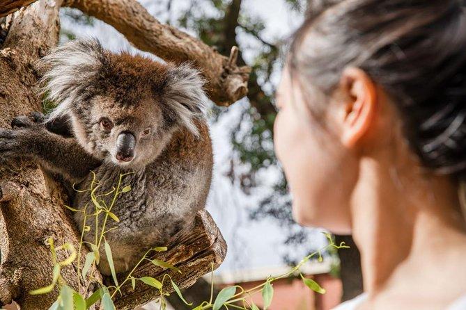 Adelaide Zoo Behind the Scenes Experience - Koala Encounter