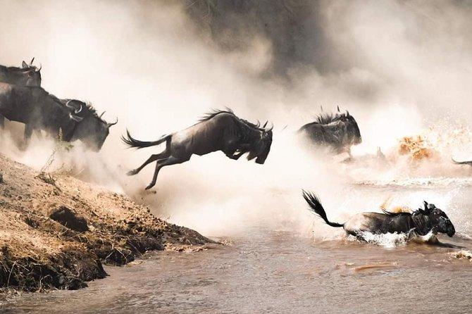 Maasai Mara Migration Safari 3 Days