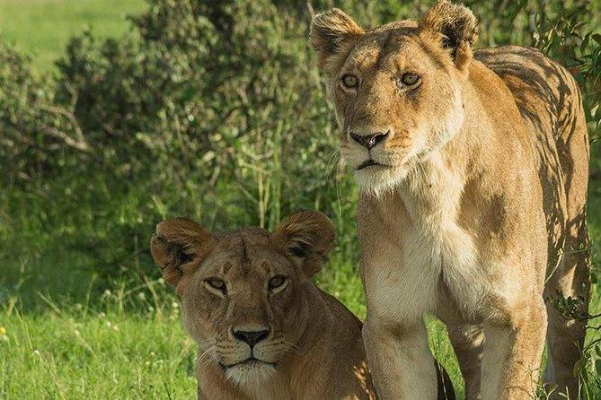 Tsavo West & East Adventure Safari 4 Days