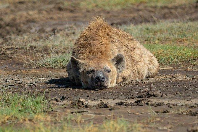Tanzania Safari Day trip Ngorongoro