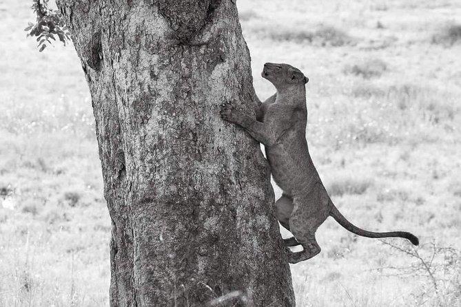 Tanzania Safari Serengeti & Ngorongoro Crater