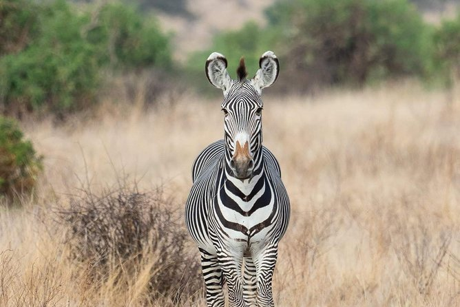 Ngorongoro Day trip Tanzania Safari Tour