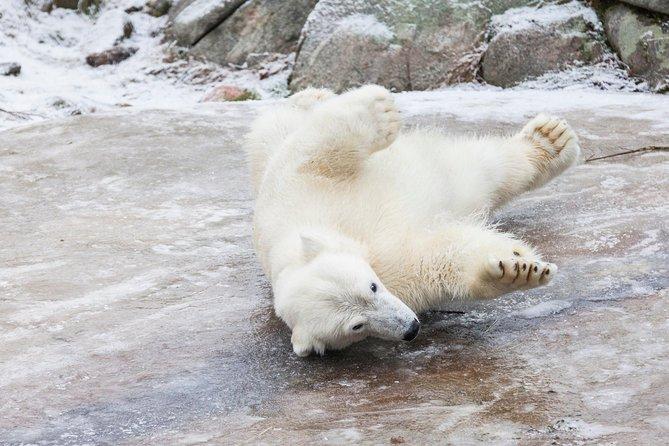 Ranua Wildlife Park Day : Visit the Arctic Animals!