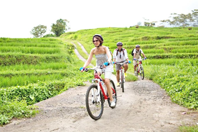 Bali E-Bike Adventure in Jatiluwih Rice field (with Lunch)