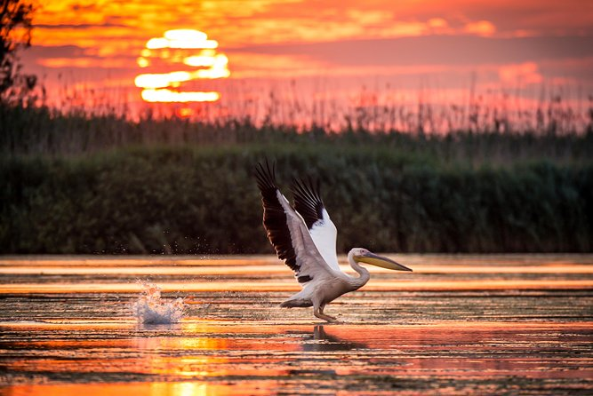 Private day trip to the Danube Delta from Tulcea