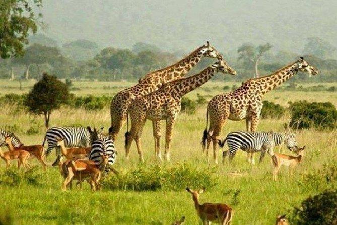 5 Days Murchison Safari with Chimpanzee Trekking (Budget)