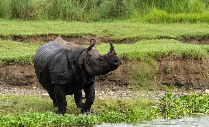 Wildlife tour in Chitwan.
