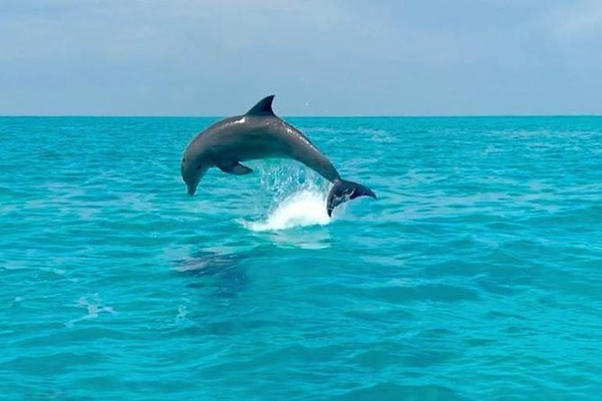 Key West Dolphin Watch and Snorkel Cruise photo 12