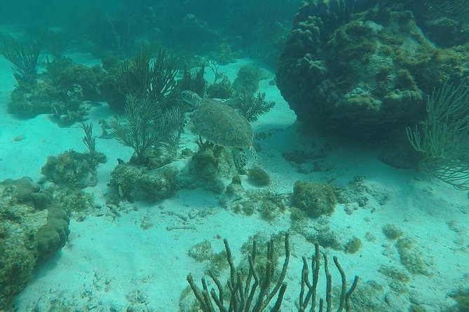 Snorkeling with green sea turtle.