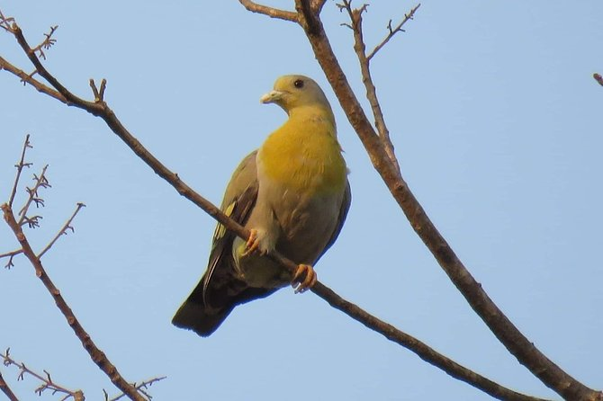 Myanmar Bird Watching Tour to Bagan and Mt.Victoria