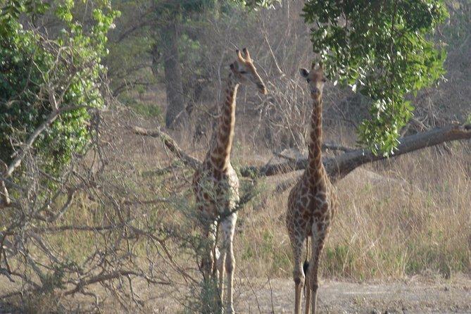 Safari To Fathala, Senegal