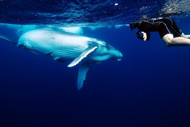 Humpback Whale Watching, Eco-Tour, Grand Turk