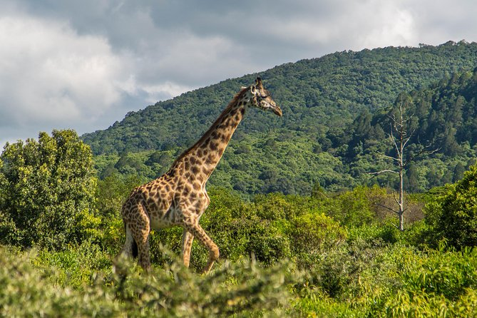 Day Trip Tour to Arusha National Park from Arusha town