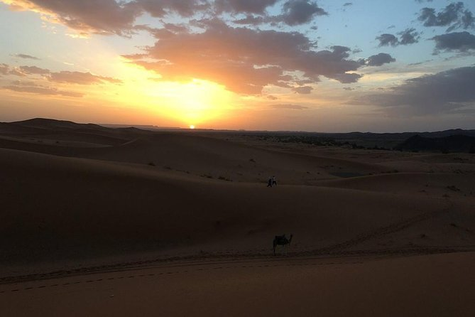 Sunset By Camels In Erg Chebbi Dunes