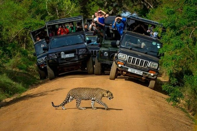 Yala Safari Day Trip from Kalutara and Surroundings - All Inclusive Package photo 2