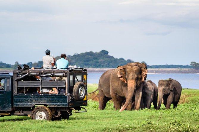 Minneriya Elephant Safari wth Sigiriya & Dambulla Cave Temples Full Day Tour