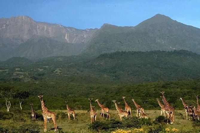 Tanzania Safari Mount Meru Day Trip Hiking