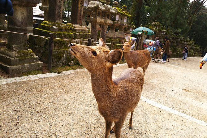 Deer City Nara Walking & Izakaya Hopping Tour photo 5