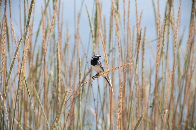 Bird Watching Tour in Aswan