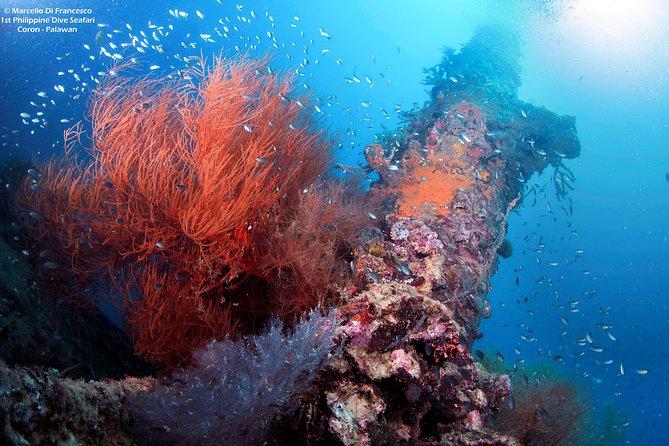Coron Reef and Shipwreck Ecotours